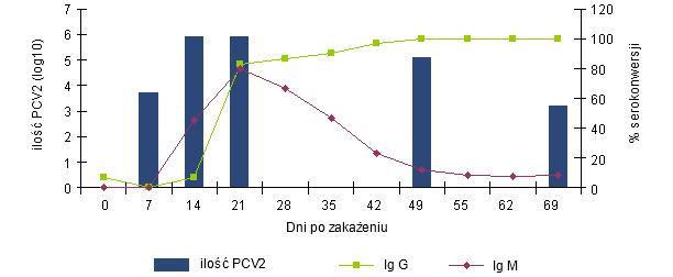 Zmiany poziomu przeciwciał IgG i IgM zmierzone testem blocking ELISA (INGENASA) i wiremii PCV2 po eksperymentalnym zakażeniu (Segalés et al. 2005)