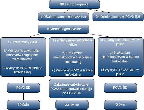 Selection and diagnostic criteria for PCV2 infected pigs