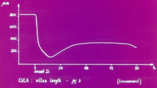 Długość wirusa