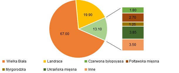 Breed composition of sows in Ukraine