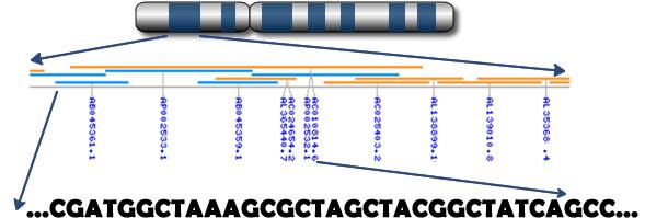 Nukelotydy zawarte w genach w chromosomie