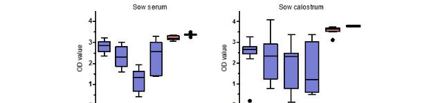 Poziomy specyficznych IgG anty-PCV2 w surowicy i siarze