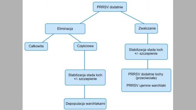 Rycina 1. Schemat różnych kierunków postępowania w stadzie PRRSV dodatnim.