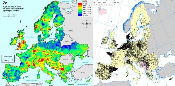 Po lewej: cynk w glebach uprawnych UE (Gemas 2014): Najwyższe poziomy cynku w glebie ( w górnych 20cm) na terenach uprawnych UE (źródło Reimann et al., 2014). Po prawej: stada loch w UE (Eurostat, 2014).