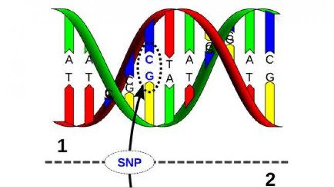 Genomika – łączenie SNP z wydajnością hodowlaną