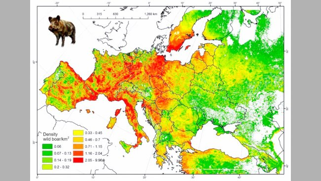 Figure 2.Estimated boar population in Europe. Source: FAO-ASFORCE, May2015.