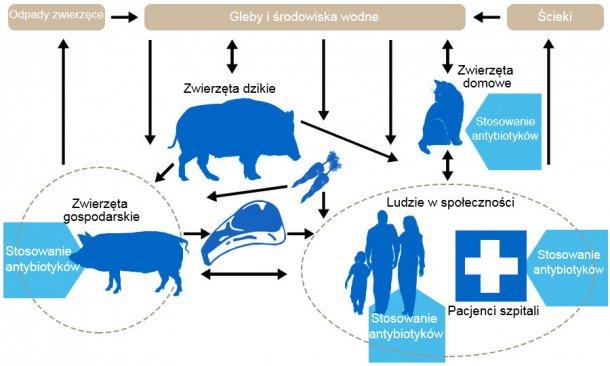 Schemat przedstawiający determinanty oporności na antybiotyki wśród różnych rezerwuarów. Niebieska strzałkawskazuje punkty podawaniaantybiotyków. Http://www.effort-against-amr.eu/