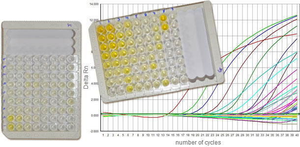 Testy serologiczne zwykle różnicują serokonwersję IgM i IgG, pozwalając na przybliżone określenie etapu infekcji. Ilościowy PCR (q-PCR) dostarcza informacji o poziomie zakażenia (ilości wirusa)