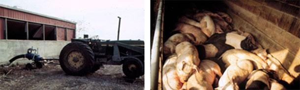 Fot. 4: Ostrożnie przy mieszaniu i pompowaniu. Pracownicy preżyli ten wypadek, zwierzęta nie.