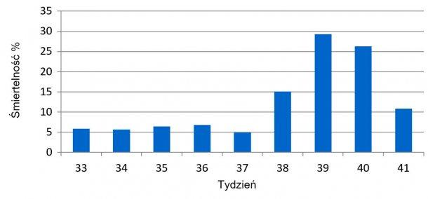 Wykres 1. Tygodniowa śmiertelność przed odsadzeniem przed i w trakcie wybuchu PED.