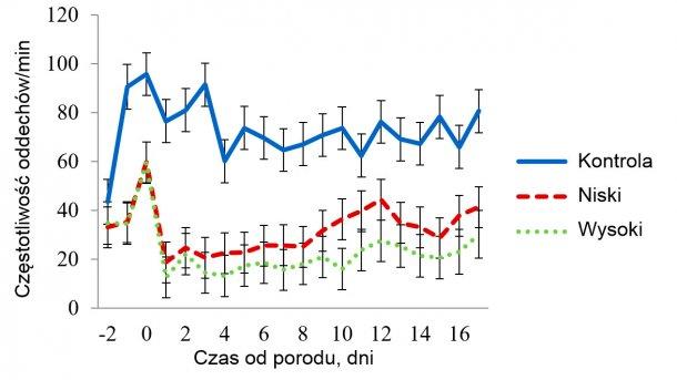 Wykres 4 - Średnia najmniejszych kwadratów dla częstotliwości oddechów (RR) u loch w pomieszczeniach ze średnim stresem cieplnym. Temperatury wynosiły 32 ºC w godz. 08.00-16.00 i 27 ºC w pozostałych godzinach. Stosowanie mat (Trt) wpłynęło na RR (P < 0.001), podobnie jak temp. pomieszczeń (Room), pora dnia (Time), dzień laktacji i interakcje między of Trt x Room, Trt x Time, Room x Time.
