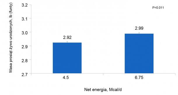 Wykres 3. Wpływ różnej podaży energii od 90 do 111 dnia ciąży na indywidualną masę ciała prosiąt loch i loszek