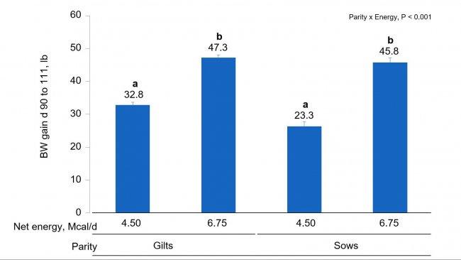 Wykres 1B. Wpływ różnej podaży energii od 90 do 111 dnia ciąży na wzrost masy ciała loch i loszek. (P < 0.05).