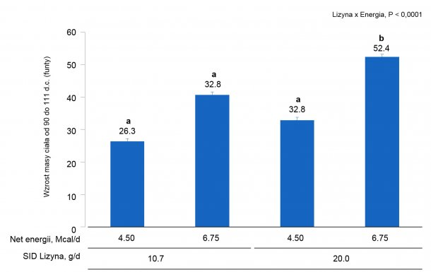 Wykres 1A. Wpływ różnego poziomu ilości lizyny i energii w paszy od 0 do 111 dnia ciąży na zwiększenie masy ciała (BW) loch i loszek. (P < 0.05).