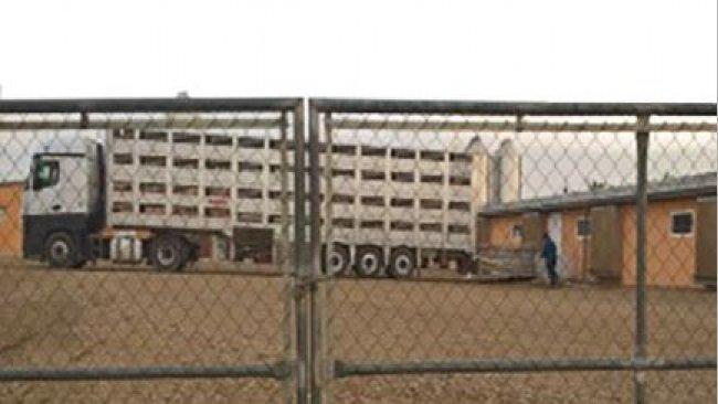 Fot 1. Musimy zapobiegać wjazdowi ciężarówki na fermę