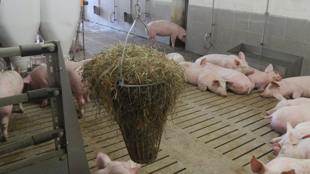Picture 2. Manipulable material available for pigs. Picture courtesy of Inge Böhne