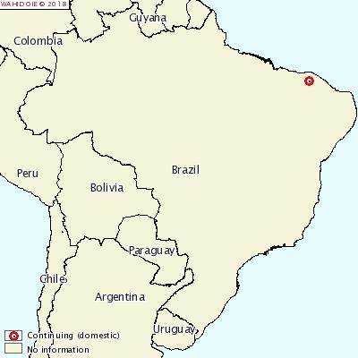 CSF brazil