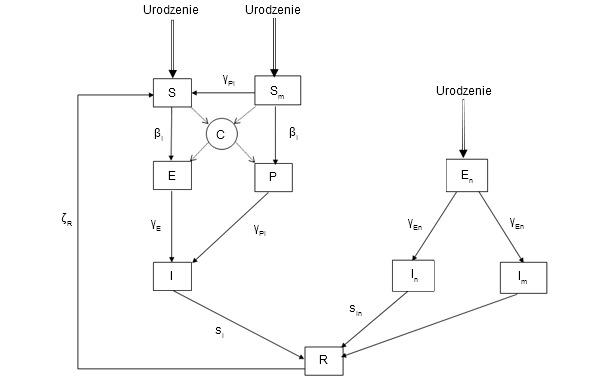 Epidemiologiczny model zakażenia PCV2.