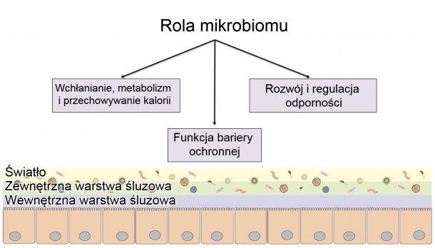 Rola mikrobiomu: zapewnienie ochronnej bariery jelitowej, trawienie i metabolizowanie składników odżywczych oraz regulacja odporności.