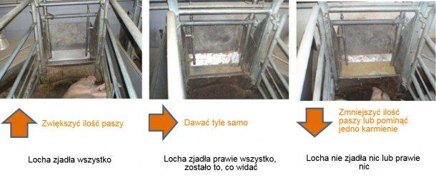 Fot. 2: Przynajmniej raz dziennie należy sprawdzać koryta loch i należy zdecydować, czy locha może jeść więcej, czy nie, w zależności od obserwacji. Źródło: Pig Research Center
