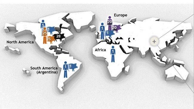 Figure 1. Najważniejsze typy Streptococcus suis serotyp 2 wg. sekwencji (STs) określone techniką MLST (multilocus sequence typing). Szczepy ST1 serotypu 2 są głównie związane z chorobą u świń i ludzi(tam, gdzie dostępne są dane) w Europie, Azji, Afryce i Ameryce Południowej (Argentyna). ST7, pojedynczy wariant locus ST1, jest endemiczny dla Chin kontynentalnych. Sytuacja wygląda inaczej w Ameryce Północnej, gdzie opisano kilka przypadków klinicznych zakażenia ST1 u świń i tylko 1 przypadek u ludzi. W rzeczywistości północnoamerykańskie szczepy serotypu 2 należą głównie do ST25 ( u ludzi i świń) i ST28 (tylko świnie). Ten ostatni ST jest również związany z przypadkami klinicznymi u świń w Chinach kontynentalnych, Australii, Japonii i Tajlandii. Co ciekawe, Japonia i Tajlandia są jedynymi krajami, które zgłaszają przypadki ludzi ST28. Oprócz Ameryki Północnej odnotowano przypadki ST25 u ludzi w Australii i Tajlandii. Wreszcie, ST20 jest rozpowszechniony tylko w Europie (głównie w Holandii). Na tej mapie liczby (1, 20, 25, 28, 104) w różnych gospodarzach reprezentują różne ST (tj. ST1, ST20, ST25, ST28, ST104) i każdemu ST przypisano inny kolor. Mapa została stworzona na posdtawie: Segura M, Fittipaldi N, Calzas C, Gottschalk M. Critical Streptococcus suis virulence factors: Are they all really critical? Trends Microbiol. 2017; 25 (7): 585-599. doi: 10.1016 / j.tim.2017.02.005, z prawem autorskim.