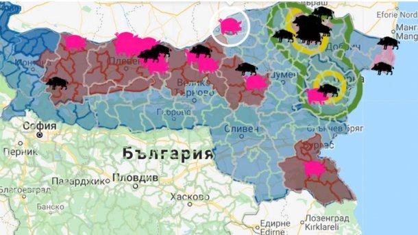 Ognisko z 17 000 świń znajdowało się w pobliżu granicy z Rumunią .