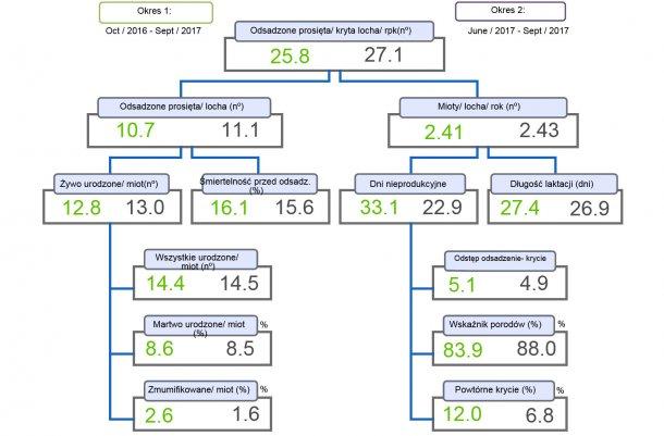 Wykres 1. Schemat produkcyjności porównujący dwa okresy prosięta odsadzone/ kryta locha/ rok.