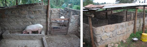Ulepszenia zagród dla świń, Kiambu, Kenia