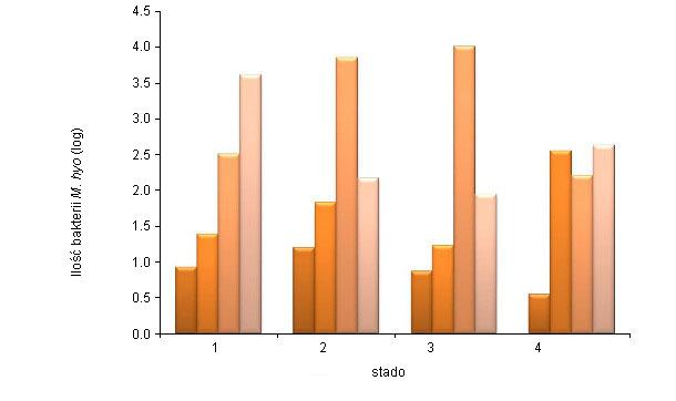 Ilość M. hyopneumoniae  (średnia log patogenów na ml) określona przez nPCR z popłuczyn oskrzelowych (BAL) u świń 6, 10 i 14 tygodniowych i po uboju z 4 różnych stad (Vranckx et al. 2012)
